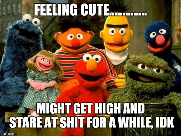 Elmo and Friends | FEELING CUTE.............. MIGHT GET HIGH AND STARE AT SHIT FOR A WHILE, IDK | image tagged in elmo and friends | made w/ Imgflip meme maker