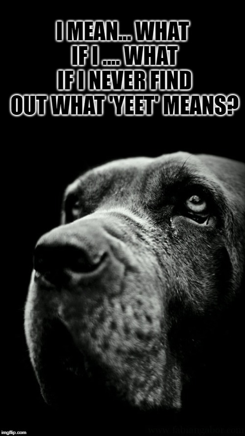 sigh... | I MEAN... WHAT IF I .... WHAT IF I NEVER FIND OUT WHAT 'YEET' MEANS? | image tagged in sad dog,nixieknox,memes,yeet | made w/ Imgflip meme maker