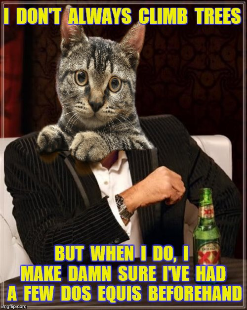 I  DON'T  ALWAYS  CLIMB  TREES BUT  WHEN  I  DO,  I  MAKE  DAMN  SURE  I'VE  HAD  A  FEW  DOS  EQUIS  BEFOREHAND | made w/ Imgflip meme maker