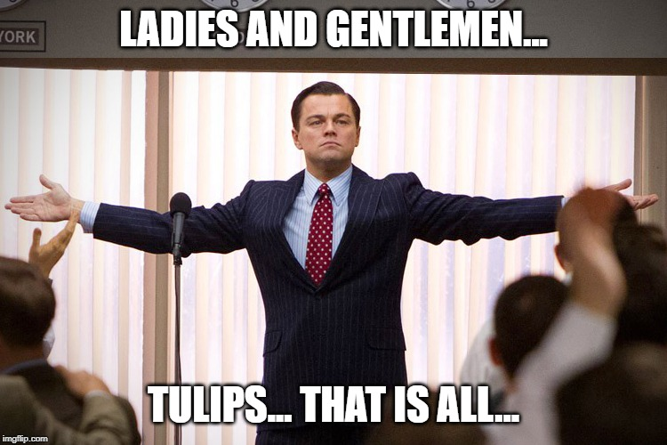 Ladies And Gentlemen | LADIES AND GENTLEMEN... TULIPS... THAT IS ALL... | image tagged in ladies and gentlemen | made w/ Imgflip meme maker
