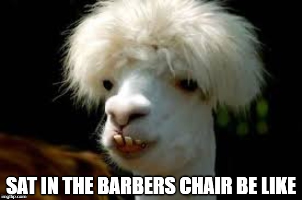 Half way there! | SAT IN THE BARBERS CHAIR BE LIKE | image tagged in haircut,barber | made w/ Imgflip meme maker