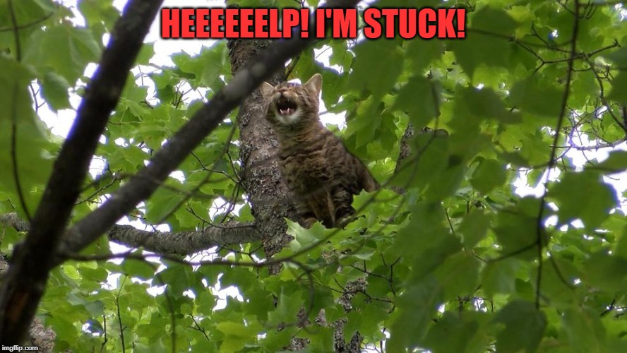 Cat in a tree | HEEEEEELP! I'M STUCK! | image tagged in cat in a tree | made w/ Imgflip meme maker