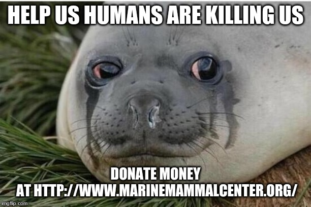 Crying Seal | HELP US HUMANS ARE KILLING US DONATE MONEY AT HTTP://WWW.MARINEMAMMALCENTER.ORG/ | image tagged in crying seal | made w/ Imgflip meme maker