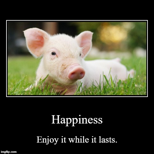 Happiness DeMotivational | Happiness | Enjoy it while it lasts. | image tagged in demotivationals,dark humor,pig | made w/ Imgflip demotivational maker