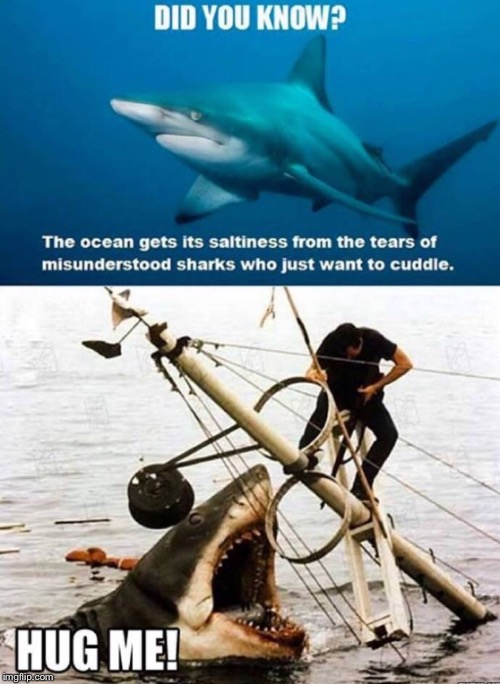 HUG ME BIATCH!!! | image tagged in jaws,shark,cuddle | made w/ Imgflip meme maker