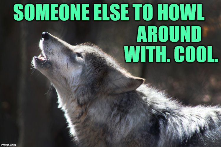 SOMEONE ELSE TO HOWL AROUND WITH. COOL. | made w/ Imgflip meme maker