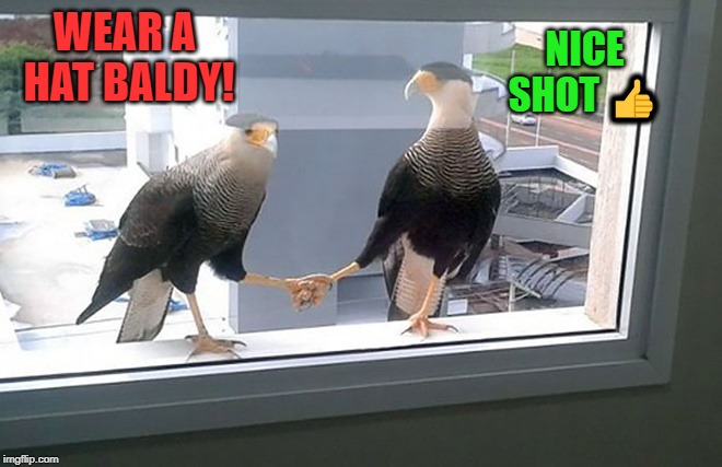bird talk | WEAR A HAT BALDY! NICE SHOT ? | image tagged in birds,poop,funny | made w/ Imgflip meme maker