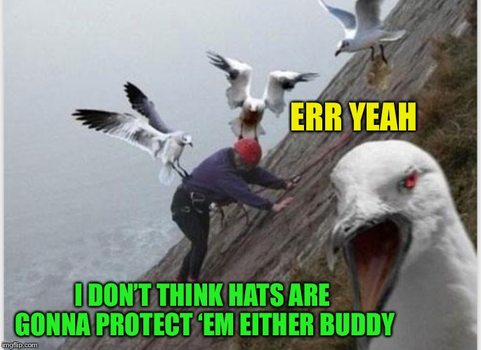 ERR YEAH I DON'T THINK HATS ARE GONNA PROTECT 'EM EITHER BUDDY | made w/ Imgflip meme maker