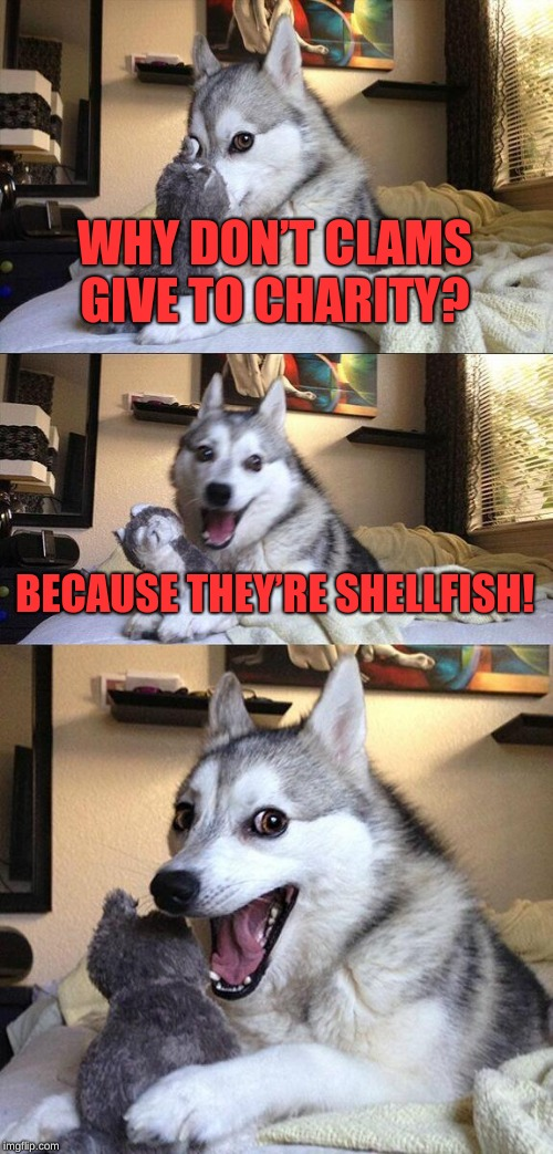 I tell funny jokes, don't i? Zoo Week May 12-18 a Dankmaster546 and 1forpeace Event | WHY DON'T CLAMS GIVE TO CHARITY? BECAUSE THEY'RE SHELLFISH! | image tagged in memes,bad pun dog,zoo week,1forpeace,dankmaster546 | made w/ Imgflip meme maker