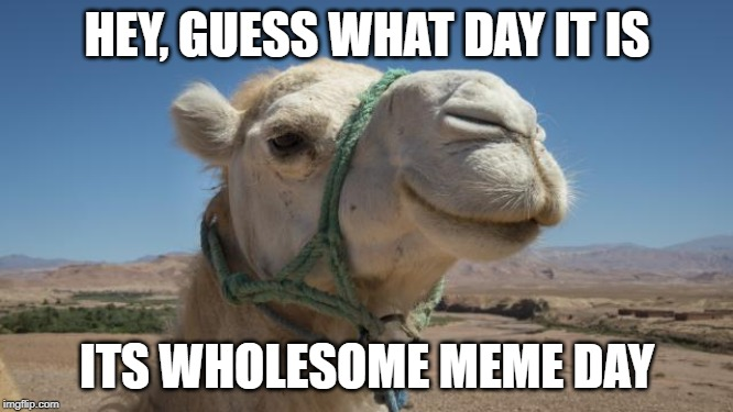 Wholesome Camel Meme Day | HEY, GUESS WHAT DAY IT IS ITS WHOLESOME MEME DAY | image tagged in wholesome camel,fun | made w/ Imgflip meme maker