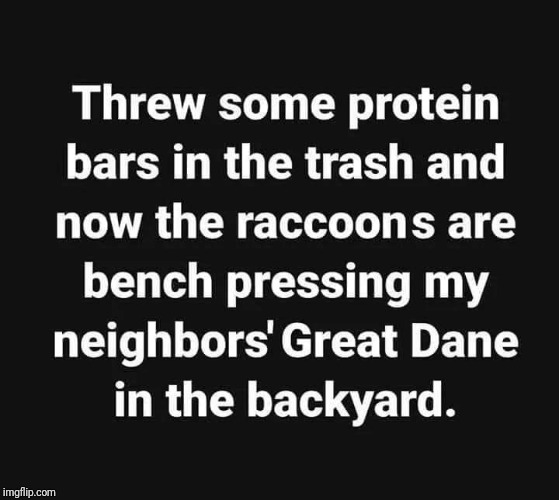Them raccoons are flexin'. Watch Out! | image tagged in funny meme,raccoon,dogs,protein,memes | made w/ Imgflip meme maker