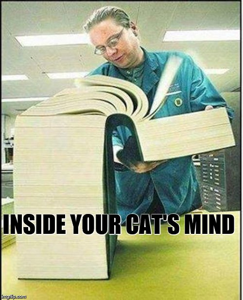 big book | INSIDE YOUR CAT'S MIND | image tagged in big book | made w/ Imgflip meme maker