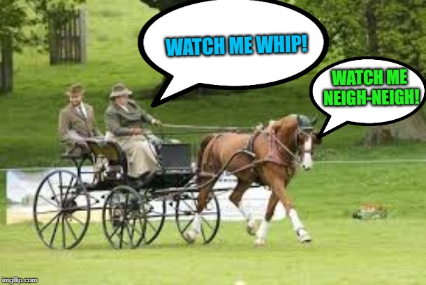 GOOOOOD MORNNG IMGFLIP! The old pun habit dies a little hard, eh? | WATCH ME WHIP! WATCH ME NEIGH-NEIGH! | image tagged in horse drawn buggy,memes,nixieknox,pun | made w/ Imgflip meme maker