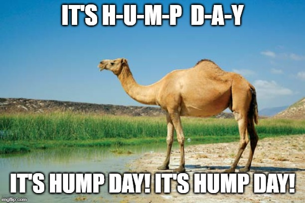 The Hump Day Song | IT'S H-U-M-P  D-A-Y IT'S HUMP DAY! IT'S HUMP DAY! | image tagged in camel,hump day,hump day camel,wednesday | made w/ Imgflip meme maker