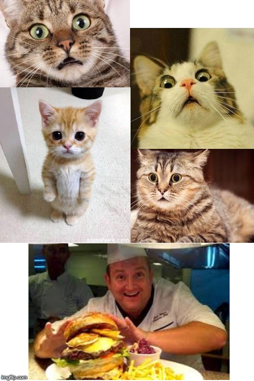 I'm inventing Cats' Day.  Because it's time  ( : | image tagged in blank white template,cats day,memes,i can has cheezburger cat | made w/ Imgflip meme maker