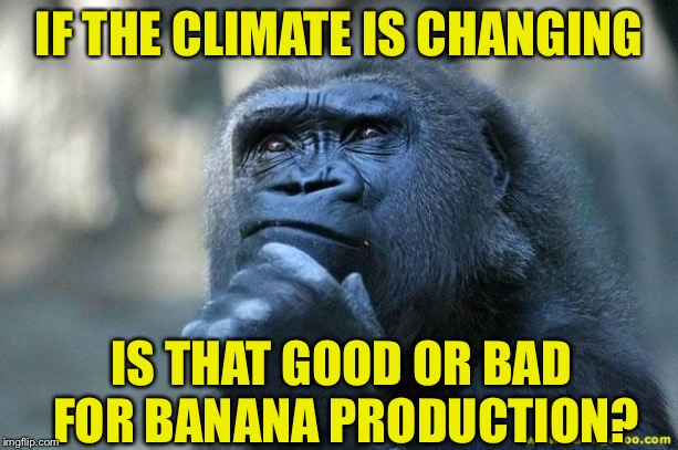 Deep Thoughts | IF THE CLIMATE IS CHANGING IS THAT GOOD OR BAD FOR BANANA PRODUCTION? | image tagged in deep thoughts | made w/ Imgflip meme maker
