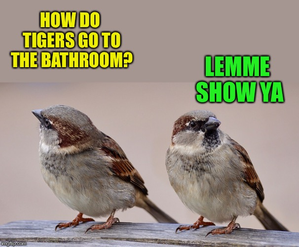 HOW DO TIGERS GO TO THE BATHROOM? LEMME SHOW YA | made w/ Imgflip meme maker