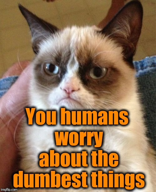 Grumpy Cat Meme | You humans worry about the dumbest things | image tagged in memes,grumpy cat | made w/ Imgflip meme maker