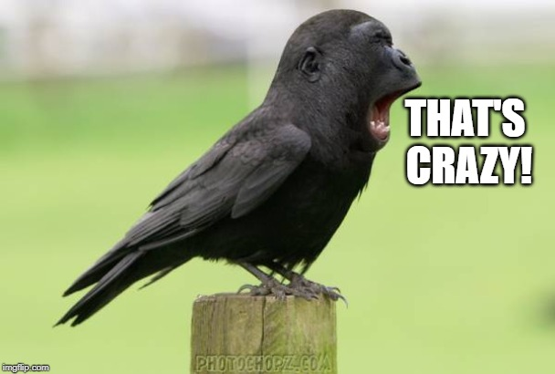 animals | THAT'S CRAZY! | image tagged in animals | made w/ Imgflip meme maker