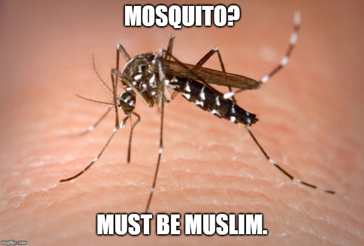 mosquito  | MOSQUITO? MUST BE MUSLIM. | image tagged in mosquito | made w/ Imgflip meme maker
