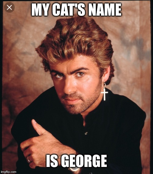 MY CAT'S NAME IS GEORGE | image tagged in cats | made w/ Imgflip meme maker