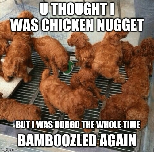 U THOUGHT I WAS CHICKEN NUGGET BAMBOOZLED AGAIN BUT I WAS DOGGO THE WHOLE TIME | image tagged in doggo | made w/ Imgflip meme maker