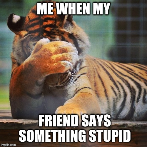 Facepalm Tiger | ME WHEN MY FRIEND SAYS SOMETHING STUPID | image tagged in facepalm tiger | made w/ Imgflip meme maker