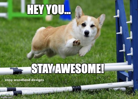 awesome corgi andshit | HEY YOU... STAY AWESOME! | image tagged in awesome corgi andshit | made w/ Imgflip meme maker