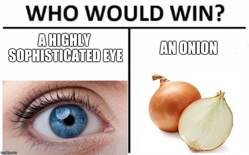 Who Would Win? Meme | A HIGHLY SOPHISTICATED EYE AN ONION | image tagged in memes,who would win | made w/ Imgflip meme maker