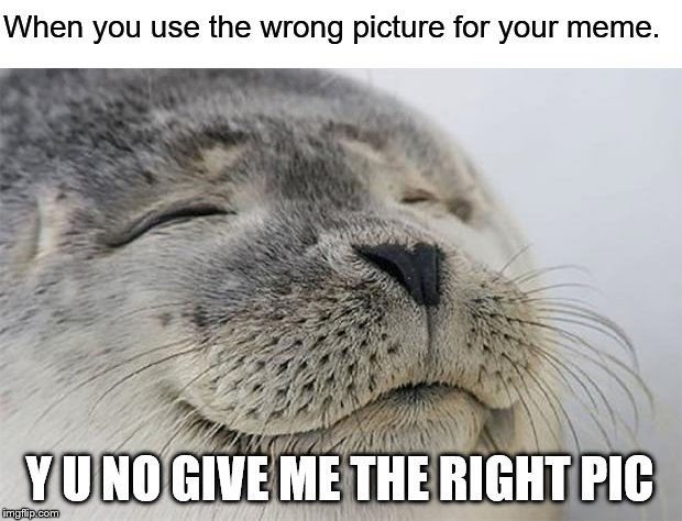Satisfied Seal | When you use the wrong picture for your meme. Y U NO GIVE ME THE RIGHT PIC | image tagged in memes,satisfied seal | made w/ Imgflip meme maker