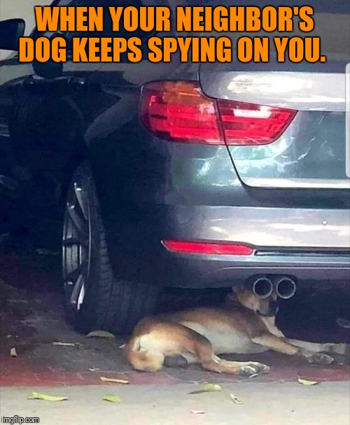 Undercover K9 | WHEN YOUR NEIGHBOR'S DOG KEEPS SPYING ON YOU. | image tagged in dog,spying,binoculars | made w/ Imgflip meme maker