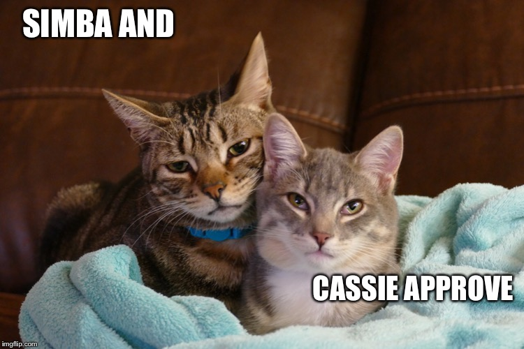 SIMBA AND CASSIE APPROVE | made w/ Imgflip meme maker