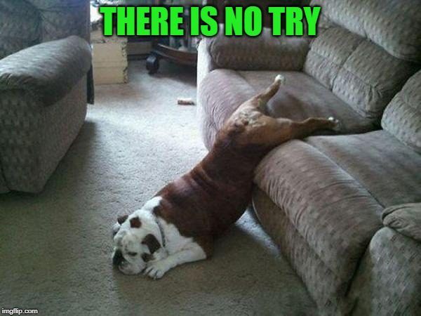 Lazy Dog | THERE IS NO TRY | image tagged in lazy dog | made w/ Imgflip meme maker