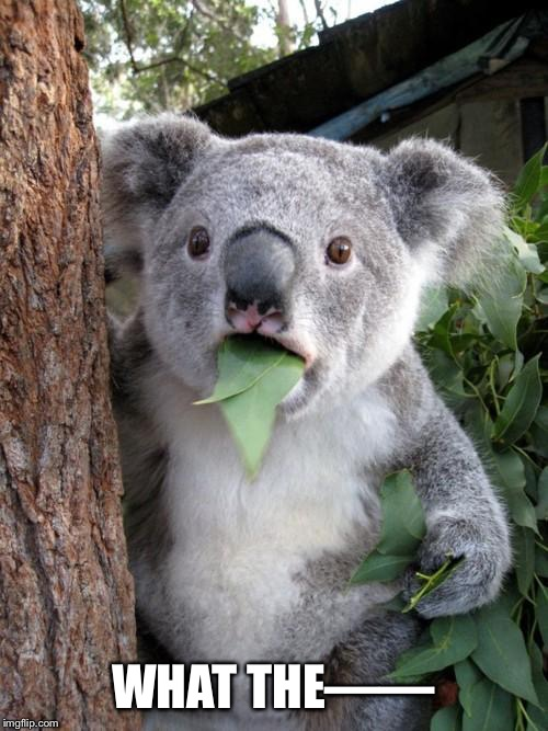 WHAT THE—— | image tagged in memes,surprised koala | made w/ Imgflip meme maker