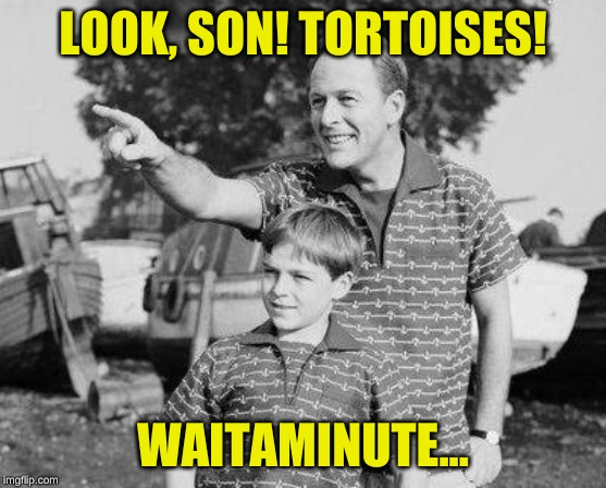 Look Son Meme | LOOK, SON! TORTOISES! WAITAMINUTE... | image tagged in memes,look son | made w/ Imgflip meme maker