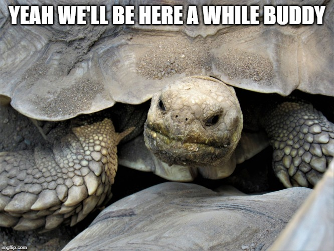 grumpy tortoise | YEAH WE'LL BE HERE A WHILE BUDDY | image tagged in grumpy tortoise | made w/ Imgflip meme maker