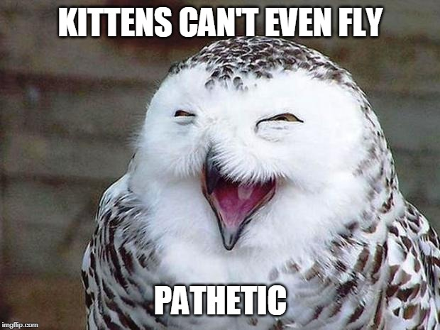 owl happy | KITTENS CAN'T EVEN FLY PATHETIC | image tagged in owl happy | made w/ Imgflip meme maker