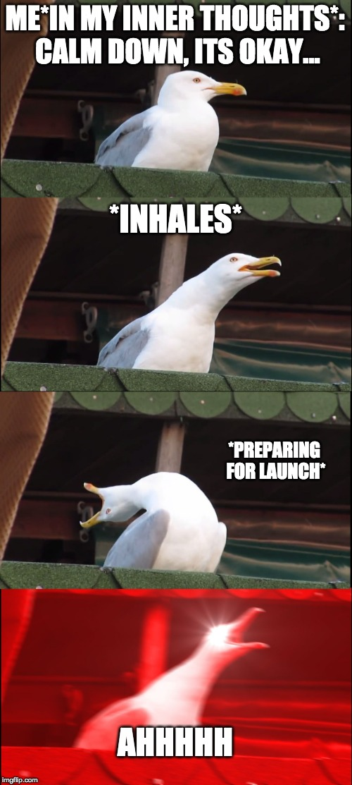 ME*IN MY INNER THOUGHTS*: CALM DOWN, ITS OKAY... *INHALES* *PREPARING FOR LAUNCH* AHHHHH | image tagged in memes,inhaling seagull | made w/ Imgflip meme maker