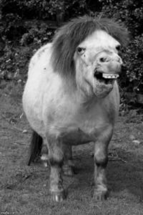 ugly horse | image tagged in ugly horse | made w/ Imgflip meme maker