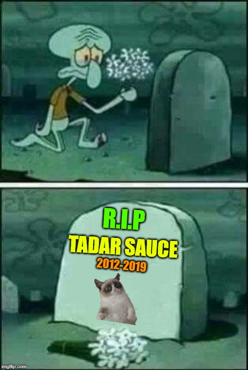 """Tadar Sauce"" Better Known As Grumpy Cat Has Has Passed Away. Thank You For All The Insults ""Oh Grumpy One"" 