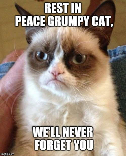 You guys heard the news? Grumpy cat died! | REST IN PEACE GRUMPY CAT, WE'LL NEVER FORGET YOU | image tagged in memes,grumpy cat,rip,rest in peace | made w/ Imgflip meme maker