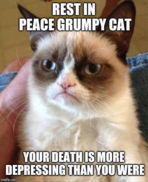 :'( Grumpy cat just passed away | REST IN PEACE GRUMPY CAT YOUR DEATH IS MORE DEPRESSING THAN YOU WERE | image tagged in memes,grumpy cat | made w/ Imgflip meme maker