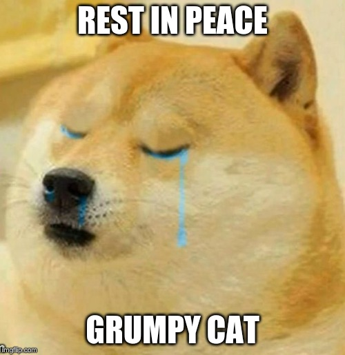 REST IN PEACE GRUMPY CAT | image tagged in sad doge | made w/ Imgflip meme maker