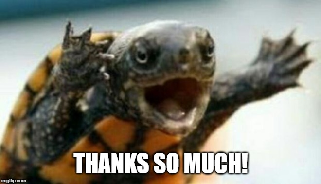 Turtle Say What? | THANKS SO MUCH! | image tagged in turtle say what | made w/ Imgflip meme maker