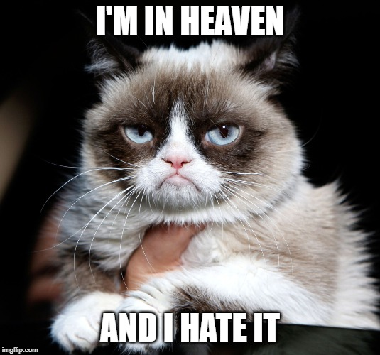 Grumpy Cat Imgflip