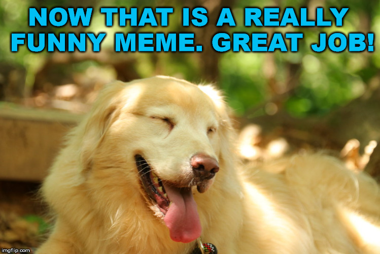 Dog laughing | NOW THAT IS A REALLY FUNNY MEME. GREAT JOB! | image tagged in dog laughing | made w/ Imgflip meme maker