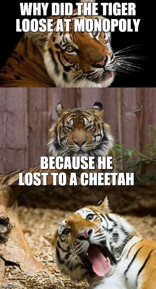 Why Did The Tiger Lose | WHY DID THE TIGER LOOSE AT MONOPOLY BECAUSE HE LOST TO A CHEETAH | image tagged in bad pun tiger,why did i make this,cheetah | made w/ Imgflip meme maker