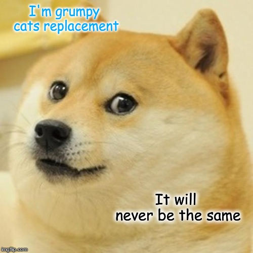 Doge | I'm grumpy cats replacement It will never be the same | image tagged in memes,doge,grumpy cat,cat,dead,funny | made w/ Imgflip meme maker