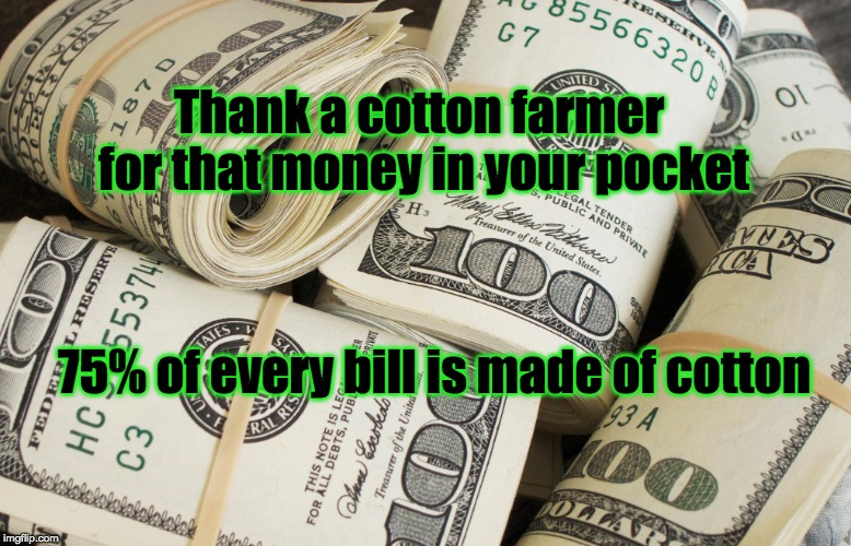 Thank a cotton farmer for that money in your pocket 75% of every bill is made of cotton | image tagged in cotton farmers,farm,farmers,cotton,money | made w/ Imgflip meme maker
