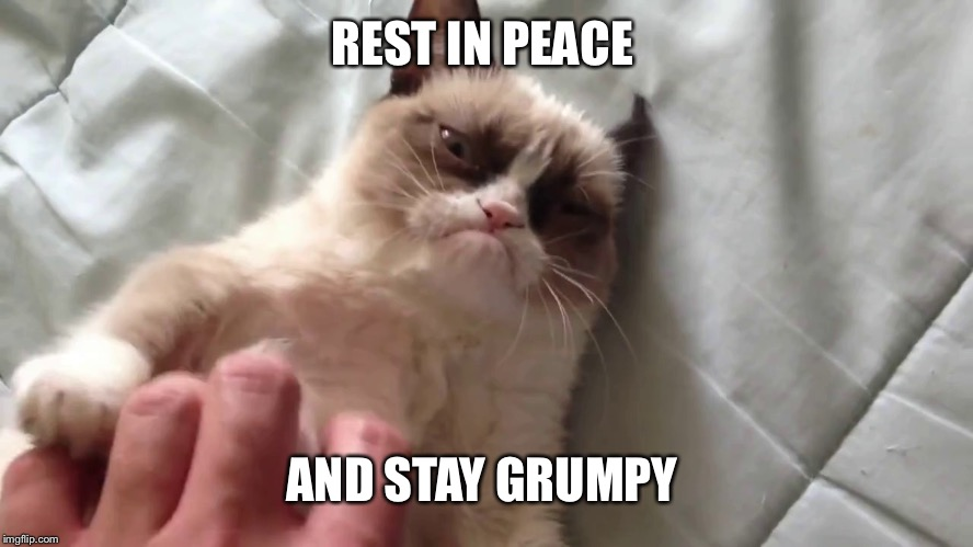 Forever grumpy | REST IN PEACE AND STAY GRUMPY | image tagged in petting grumpy cat,grumpy cat,rest in peace | made w/ Imgflip meme maker